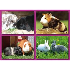 A6 Prentkaarten huisdieren