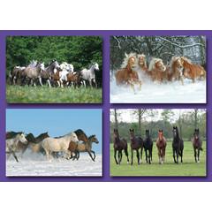 A7 Kleine kaarten paardenkudde