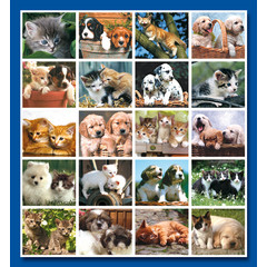 Stammetjes Stickervel puppy's en kittens