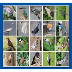 Stammetjes Stickervel vogels