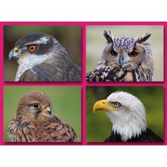 Grote ansichtkaarten roofvogels