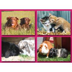 Huisdieren Samen - Grote Ansichtkaart