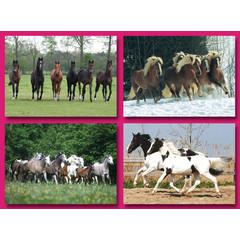 A5 Ansichtkaarten rennende paarden