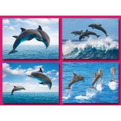 A5 Grote kaarten dolfijnen
