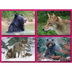 A5 Grote ansichtkaarten Noord Europees Wild