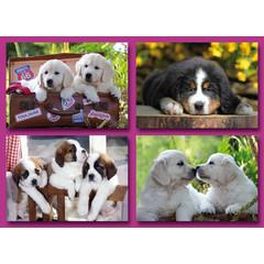 Prentkaarten hondenpuppies