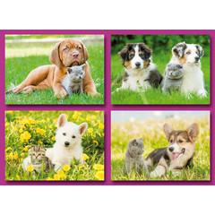 A6 Prentkaarten hondjes met poesjes