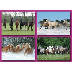 A6 Prentkaarten paarden in een groep