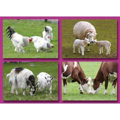 A6 Prentkaarten boerderijdieren