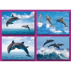 A6 Prentkaarten dolfijnen