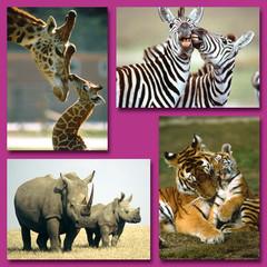 Prentkaarten wilde dieren met jong