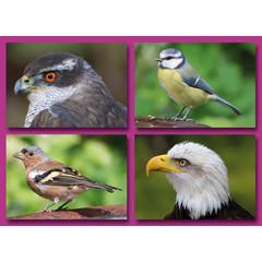 Prentkaarten vogels