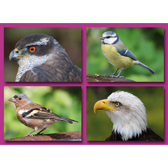 Vogels - Prentkaarten