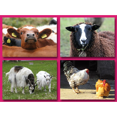 Grote ansichtkaarten boerderijdieren