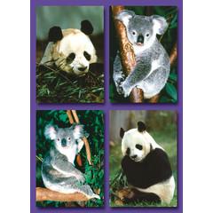 Kleine kaarten panda's en koala's