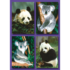 Panda's en Koala's - Kleine Kaarten