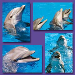 Kleine kaarten dolfijnenkoppen