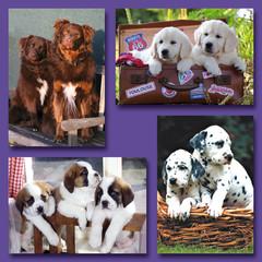 Kleine kaarten honden in mand