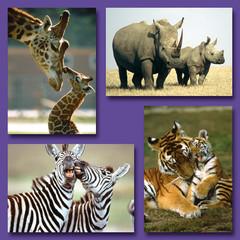 Kleine kaarten wilde dieren met hun jong
