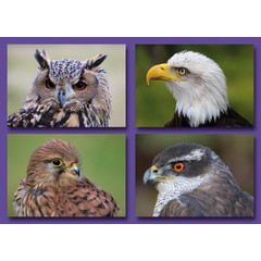 A7  Kleine kaarten roofvogels