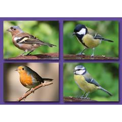 Kleine kaarten vogels