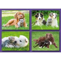 Kleine kaarten honden met poesjes
