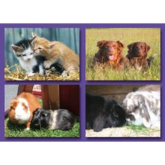 Kleine kaarten huisdieren