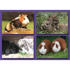 Huisdieren (Knaagdieren) - Kleine Kaarten