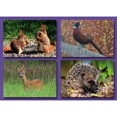 Kleine kaarten 'bos'dieren