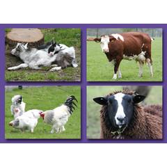 Kleine kaarten boerderijdieren