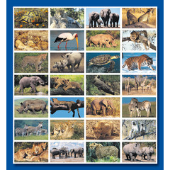 Stammetjes Stickervel wilde dieren