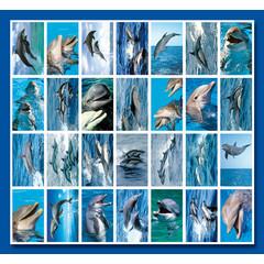 Stammetjes Stickervel dolfijnen