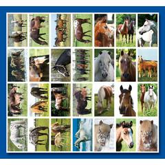 Stammetjes Paarden - Stickervel