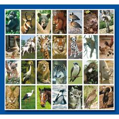 Stammetjes Stickervel dieren allerlei (2)