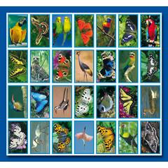 Stammetjes Stickervel vlinders en vogels