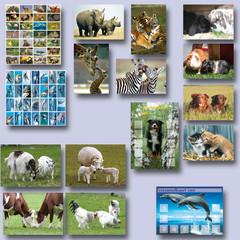 Beloningspakket dieren