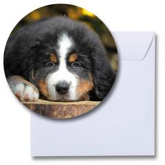 Ronde kaart hond Berner sennen