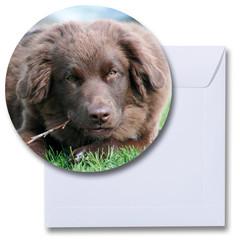 Ronde kaart hond Australian Shepherd bruin