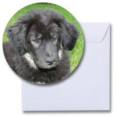 Ronde kaart hond Tibetaanse mastiff pup