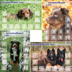 Verzamelkaarten honden