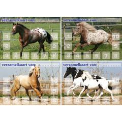 Verzamelkaarten Paarden