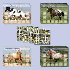 Beloningspakket paarden