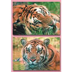 A4 Reuzewenskaarten tijgers