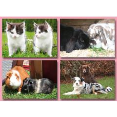 A4 Reuzewenskaarten huisdieren