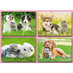 A4  Reuzewenskaarten hond met poes
