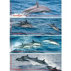 Dolfijnen - Leeswijzer