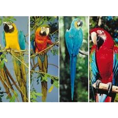 Boekenlegger papegaaien