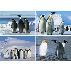 A4  Reuzewenskaarten pinguins