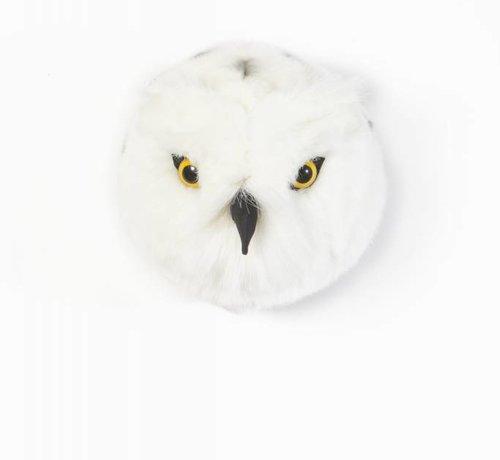 Wild & Soft Trophy, Chloe the snow owl