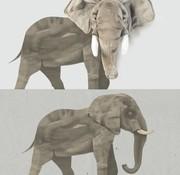 Wild & Soft Muursticker: Olifant Wild & Soft